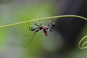 Insecto Preguntas frecuentes Centro Urku