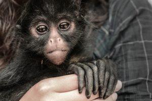 Centro Urku Rescate fauna silvestre licencia CCO
