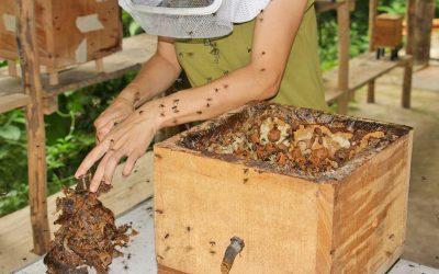 Centro Urku patenta nuevas cajas de crianza para abejas sin aguijón