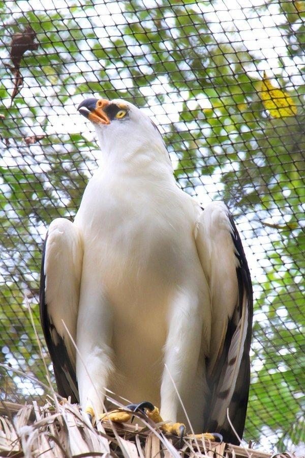 Waman águila Centro Urku