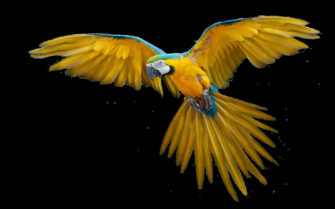Guacamayo libre centro urku Foto CC Pixabay